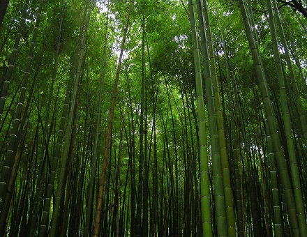 Environmental benefits of bamboo